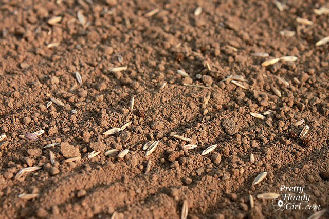 How to grow a better lawn grass seeds do make the for What does soil