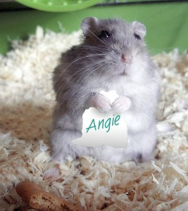 Angie_hamster