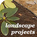landscaping gardening and plants
