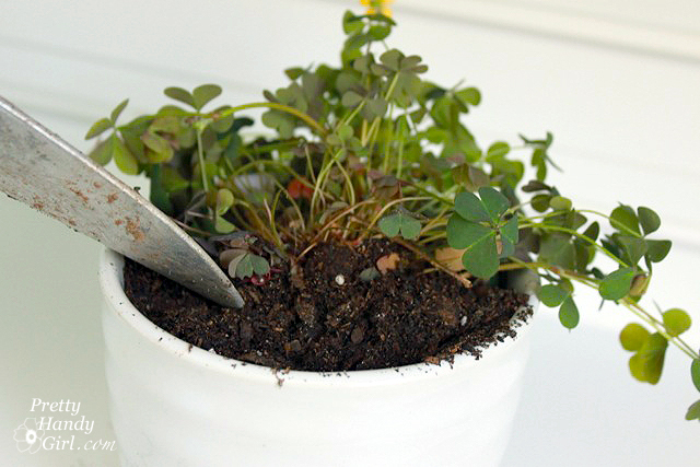 Add_potting_soil