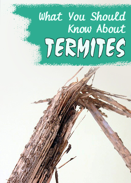 learn-about-termite-damage