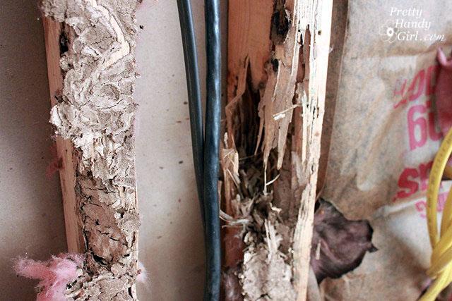 termite_rotted_board