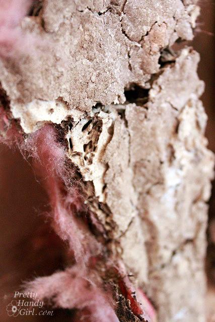 termite_tunnels