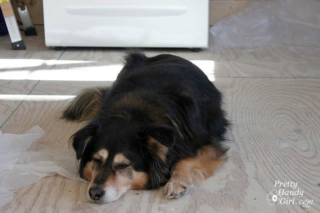 handy_dog_supervising