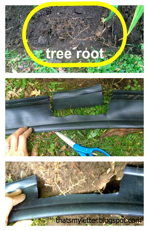 edging tree root