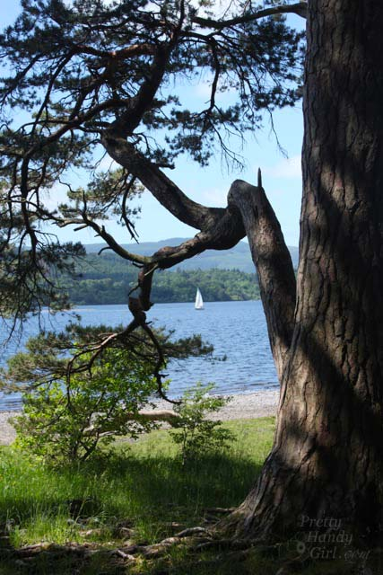 sailboat_in_tree_frame