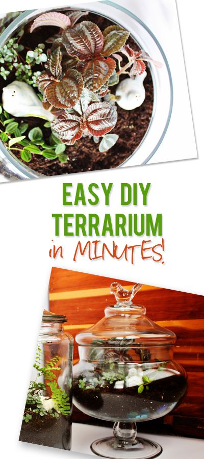 Easy DIY Terrariums in Minutes