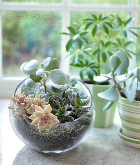 25 Ideas For Tabletop Gardens And Terrariums Pretty
