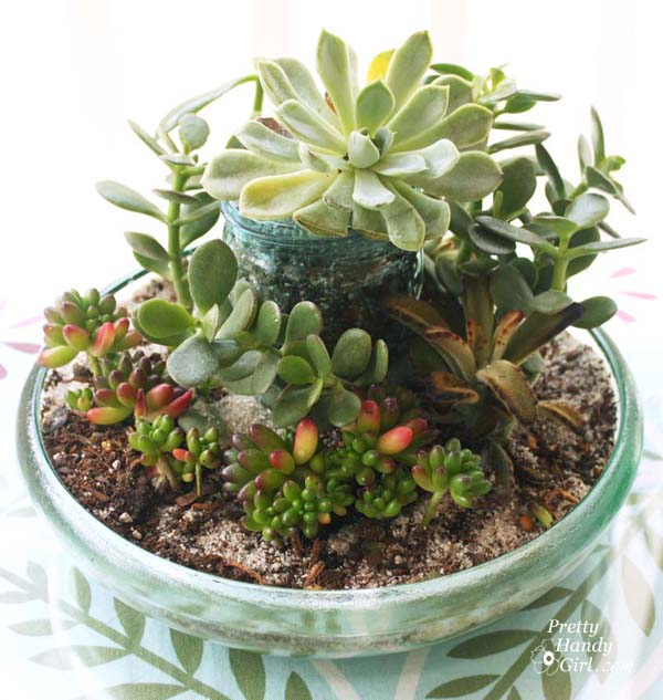 fill_in_sand_dirt_succulents