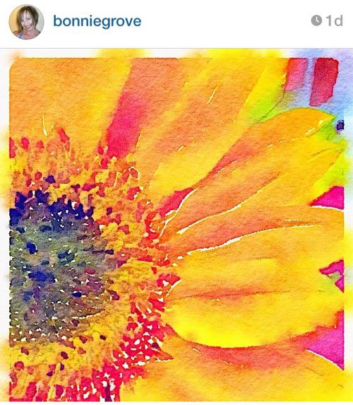 bonniegrove-sunflower