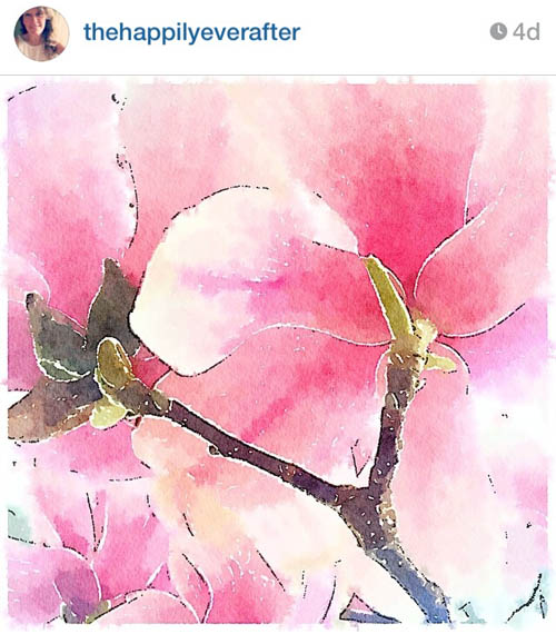 thehappilyeverafter_magnolia