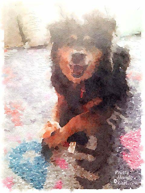 Tips for Better Waterlogue Images   Pretty Handy Girl