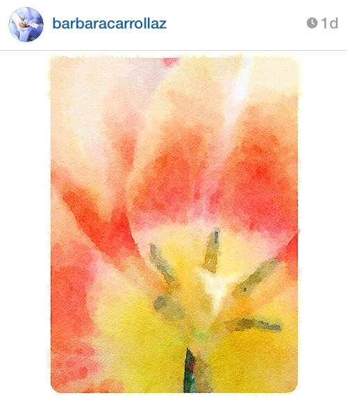 barbara_flower