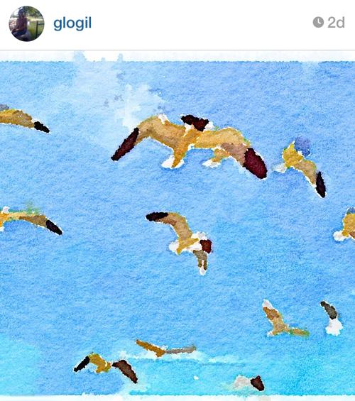 glogil_gulls