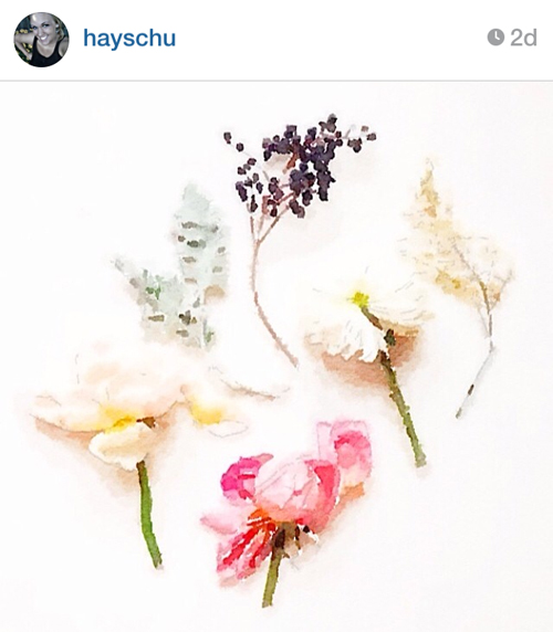 hayschu_flowers