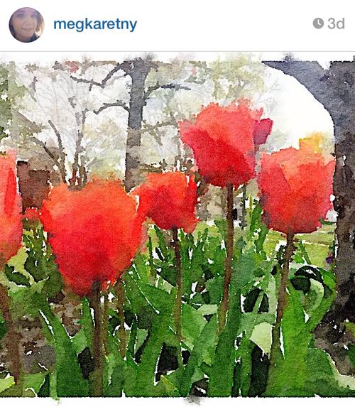 megkaretny_tulips