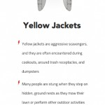How to Identify Yellow Jackets and Protect from Being Stung