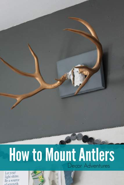 How to Mount Antlers