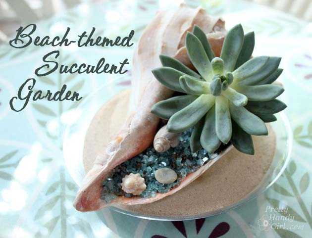 Beach-Themed Succulent Garden