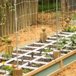 How to Build a Vegetable Trellis on a Budget