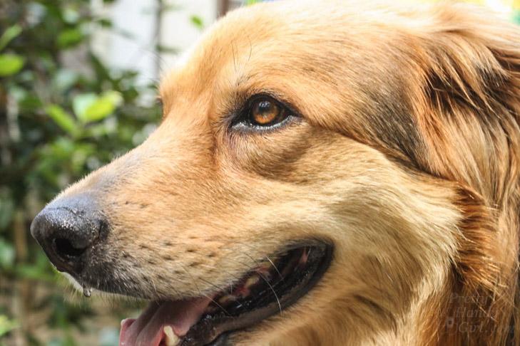 Lucky Dog Lena