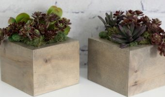 DIY Mini Planters I Pretty Handy Girl