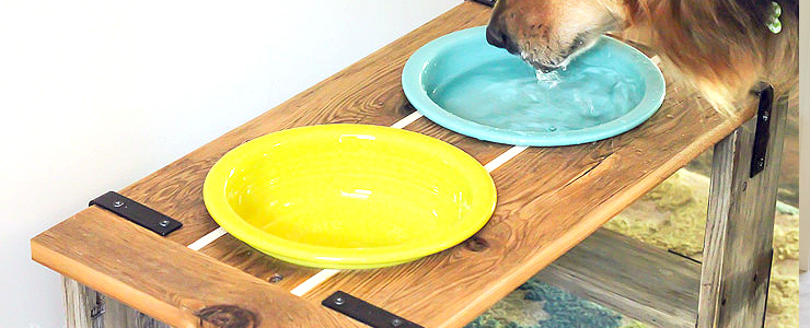 Industrial Dog Bowl Feeder Stand