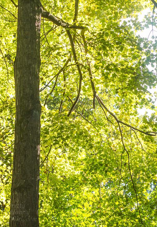 A Walk in the Woods | Pretty Handy Girl