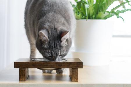 DIY Wooden Raised Pet Feeder