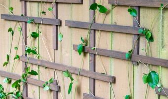 DIY Fence Trellis