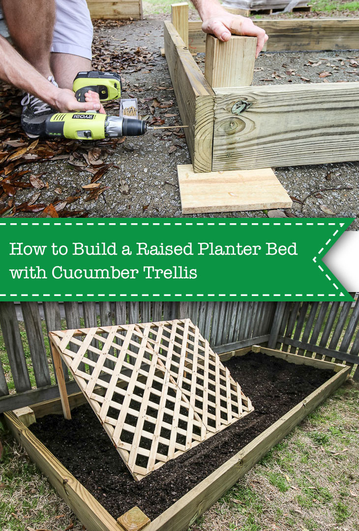 Raised planter bed and cucumber trellis