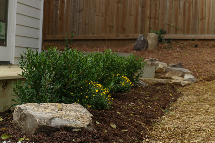 new foundation bushes by back deck