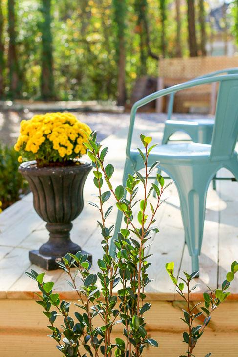 beauty shot of camellia bush and mums outside master bedroom