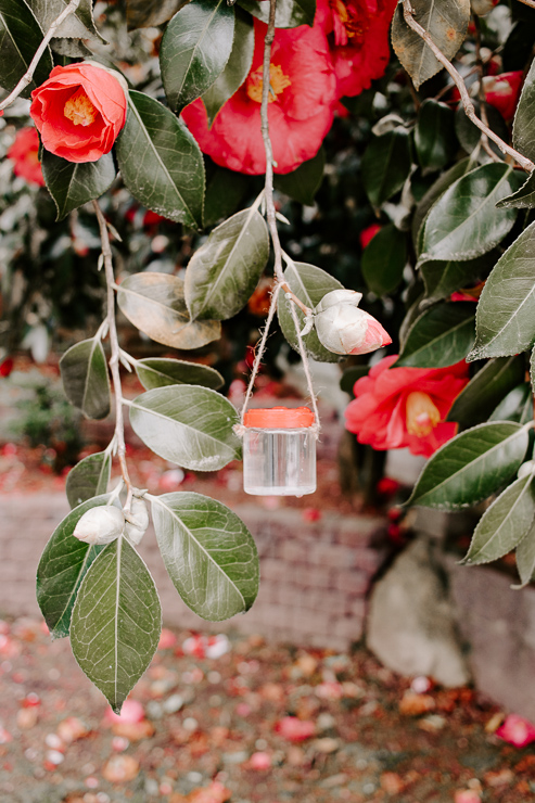 Hummingbirds love the nectar that you put in these jars