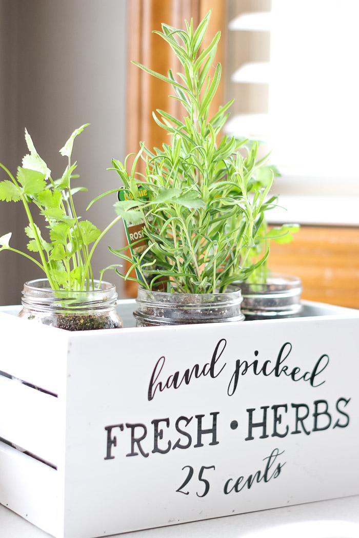 Rosemary and Cilantro indoor herb garden