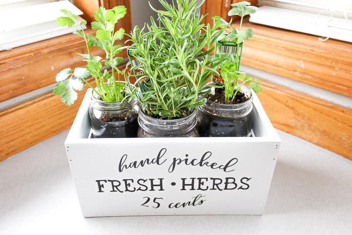 Assembling the Indoor Herb Garden