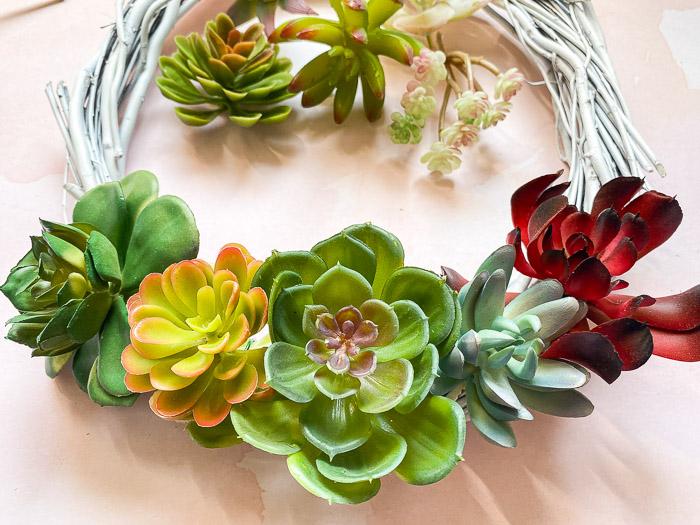 Arrange larger succulents on wreath form