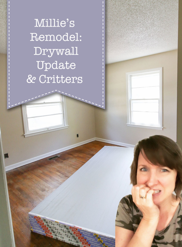 Millie's Remodel: Drywall Update and Critters