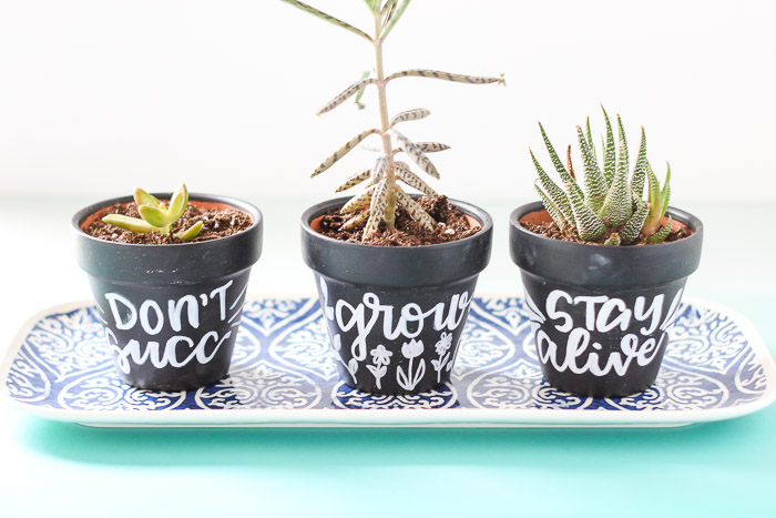 3 hand lettered chalkboard planters with various succulents and cacti