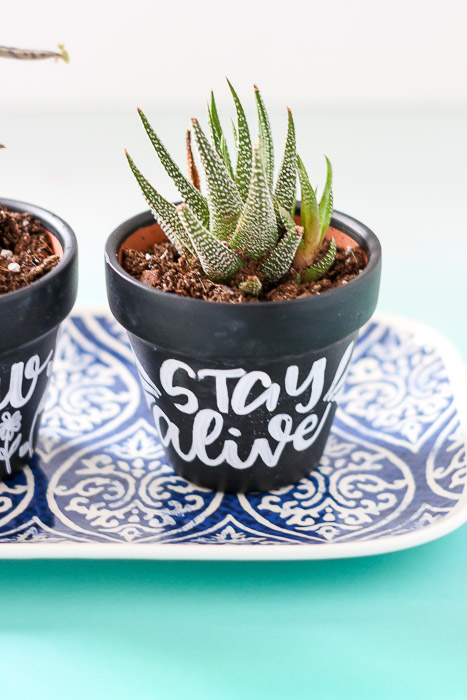 close up of stay alive planter with cactus