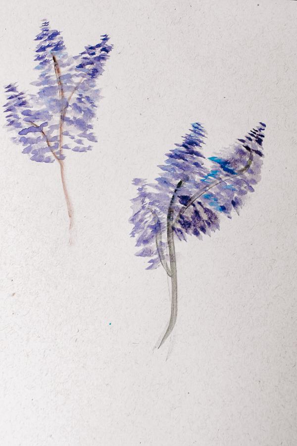 Watercolor painted lavender