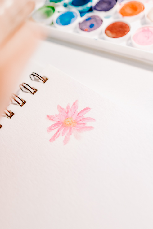 pink watercolor daisy with yellow center
