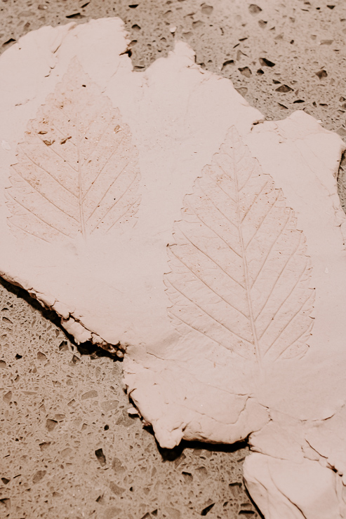 leaves imprinted in clay