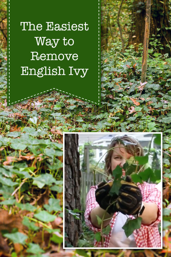 The Easiest Way to Remove English Ivy